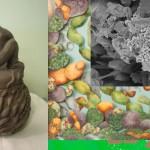 microbes_web